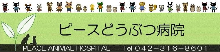サダハルちゃん☆ | ピースどうぶつ病院日記